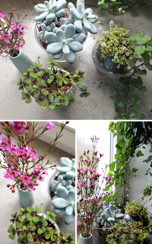 wohnen mit pflanzen