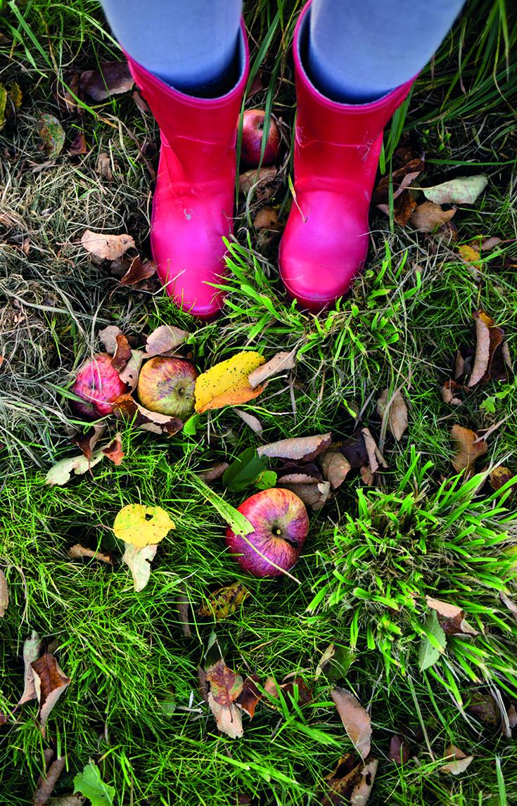 Apfel ernten, Ammersee, Natürlich Saft, Obstplantage, bei München, Herbst